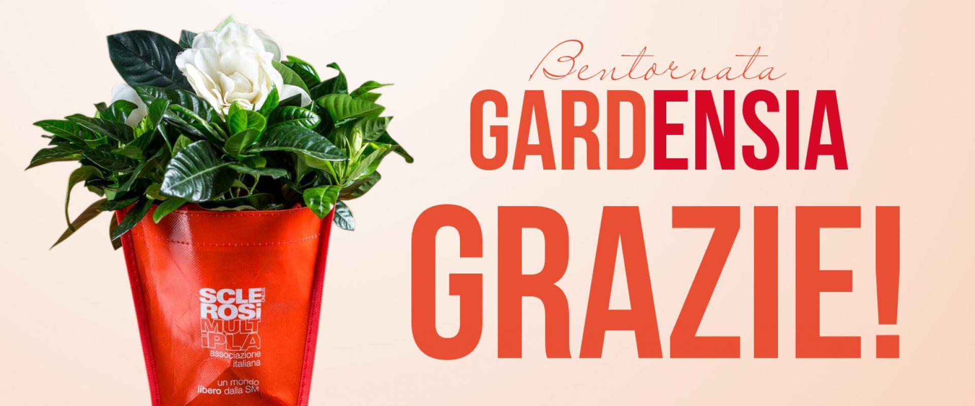 Betornata Gardensia